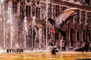 Pigeon  in Notre Dame, Paris