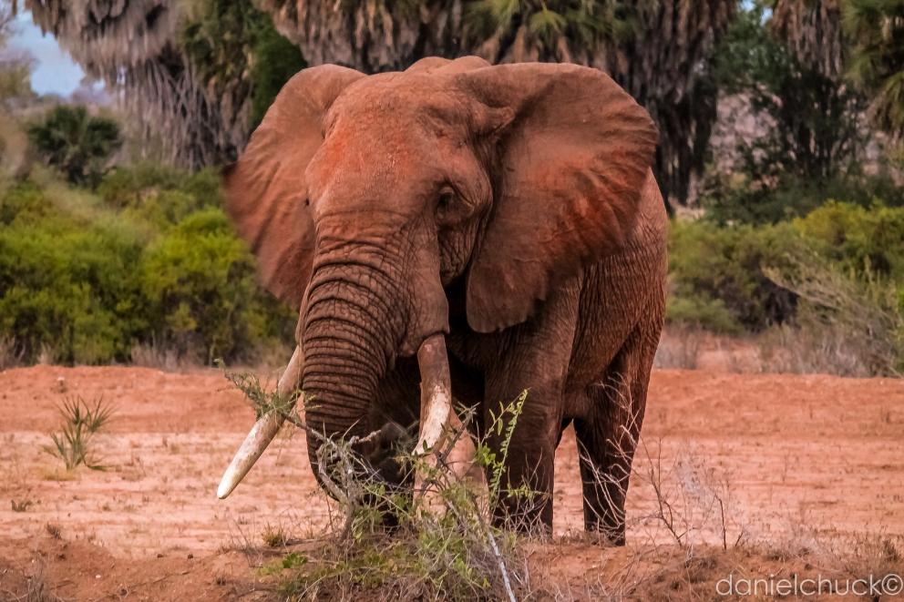 africa-6484