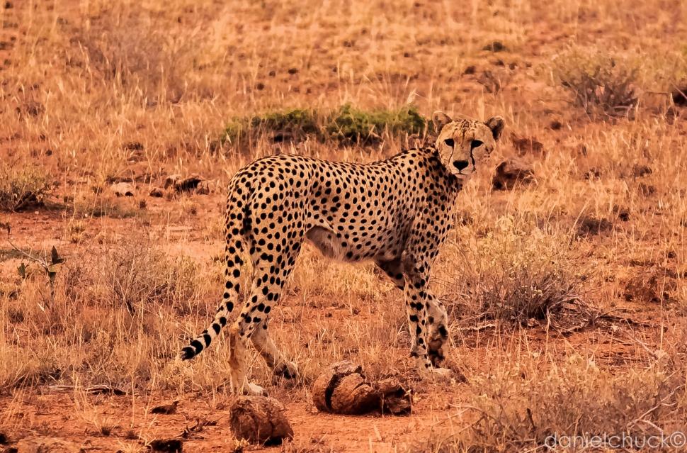 africa-6561
